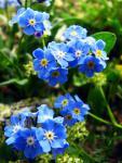 Голубое чудо