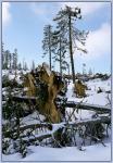 Лес очень пострадал от недавнего урагана Кирилл