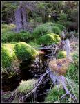 Лесное болото Новохурецке Слате