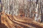 Вечерний полосатый лес