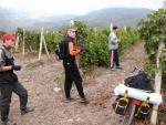 Виноградники у села Рыбачье