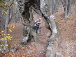 Причудливое дерево в лесу