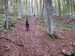 Лесная дорога к стоянке Партизанской