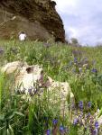 Майские травы. Пещерный город Бакла
