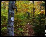 Туалети в американських лісах