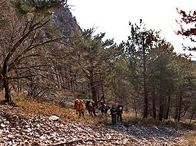 Осыпи перемежаются лесом