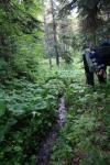Хвойный лес в долине р. Пхия