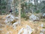Фото 41. Кедровый лес Тахталы