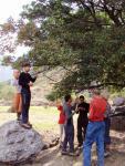 Долгожданные абрикосы долины Сурметаш