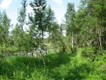 Характер руху по лісі вздовж р. Харота