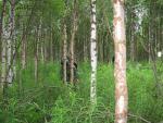Рух лісом після обходу заводі
