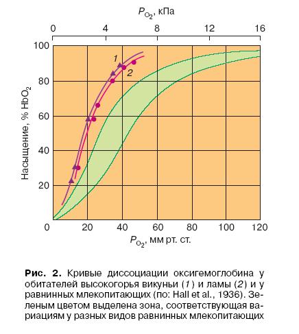 Кривые диссоциации оксигемоглобина у обиталей высокогорья викуньи и ламы