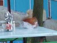 Обережно, білка!